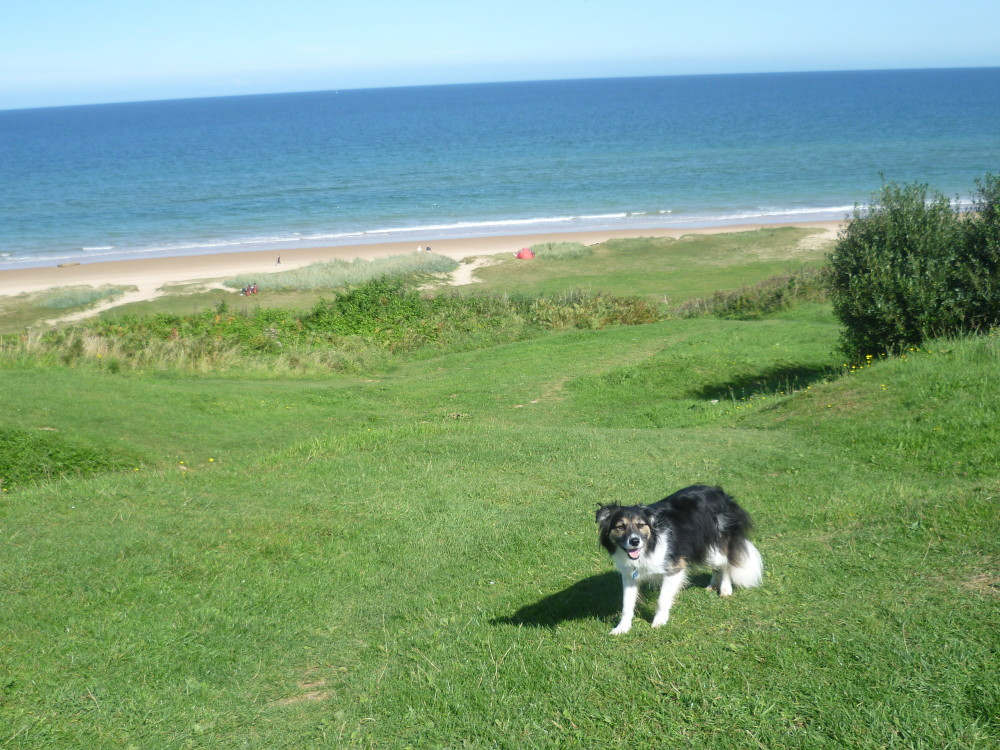 Cherbourg Peninsula dog-friendly beach, France - Image 2