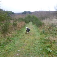 Dog walk near Loch Lomond, Scotland - Dog walks in Scotland