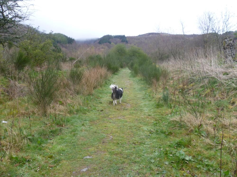 Dog walk near Loch Lomond, Scotland - Dog walks in Scotland