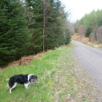 A85 dog walk between Taynuilt and Connel, Scotland - Dog walks in Scotland