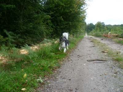 A16 exit 25 Forest of Crecy dog walk, France - Driving with Dogs