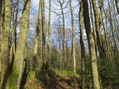 A25 woodland scramble and ramparts dog walk, Kent - Driving with Dogs