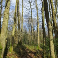 A25 woodland scramble and ramparts dog walk, Kent - IMG_0963.JPG