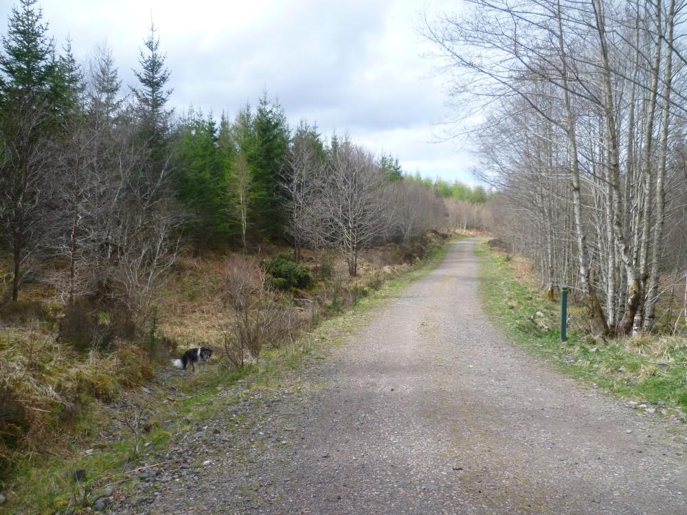 Barcaldine Forest dog walk near Oban, Scotland - Dog walks in Scotland
