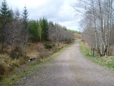 Barcaldine Forest dog walk near Oban, Scotland - Driving with Dogs