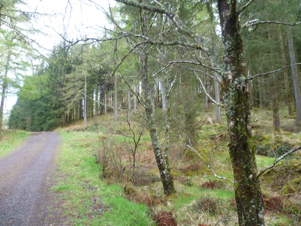 Forest dog walk near Oban, Scotland - Dog walks in Scotland