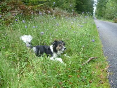 A16 exit 31 Forest dog walk near Desvres, France - Driving with Dogs