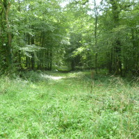 A16 exit 31 Forest dog walk near Desvres, France - Image 2