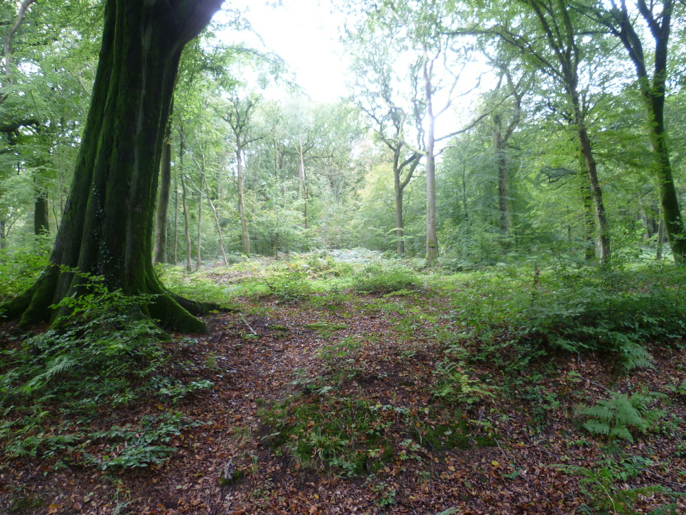 A16 exit 31 Forest dog walk near Desvres, France - Image 3
