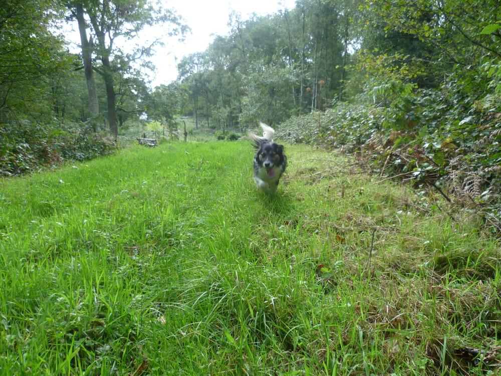 A16 exit 31 Forest of Boulogne dog walk, France - Image 1