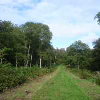 A16 exit 31 Forest of Boulogne dog walk, France - Image 2