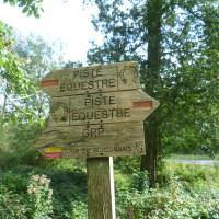 A16 exit 31 Forest of Boulogne dog walk, France - Image 4