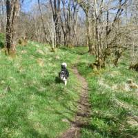 Lerags dog walk near Oban, Scotland - Dog walks in Scotland