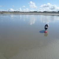 Opal Coast dog-friendly beach near Camiers, France - Image 4