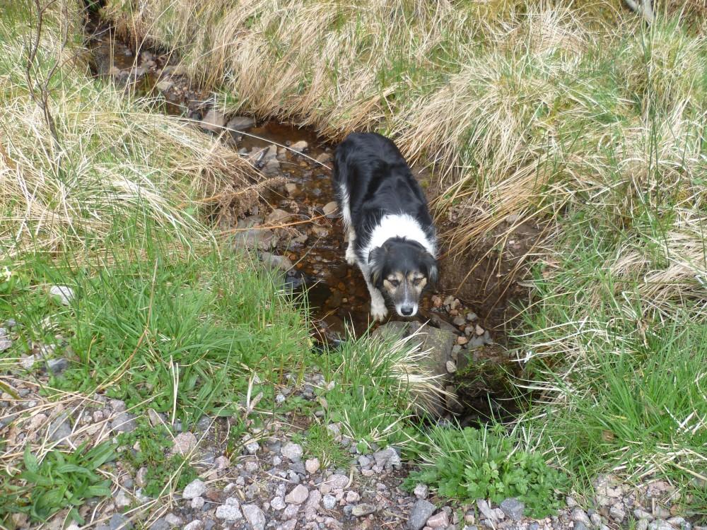 A82 dog walk near Loch Ness, Scotland - Dog walks in Scotland