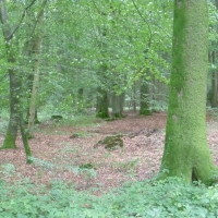 A28 exit 6 Forest dog walk near Foucarmont, France - Image 2