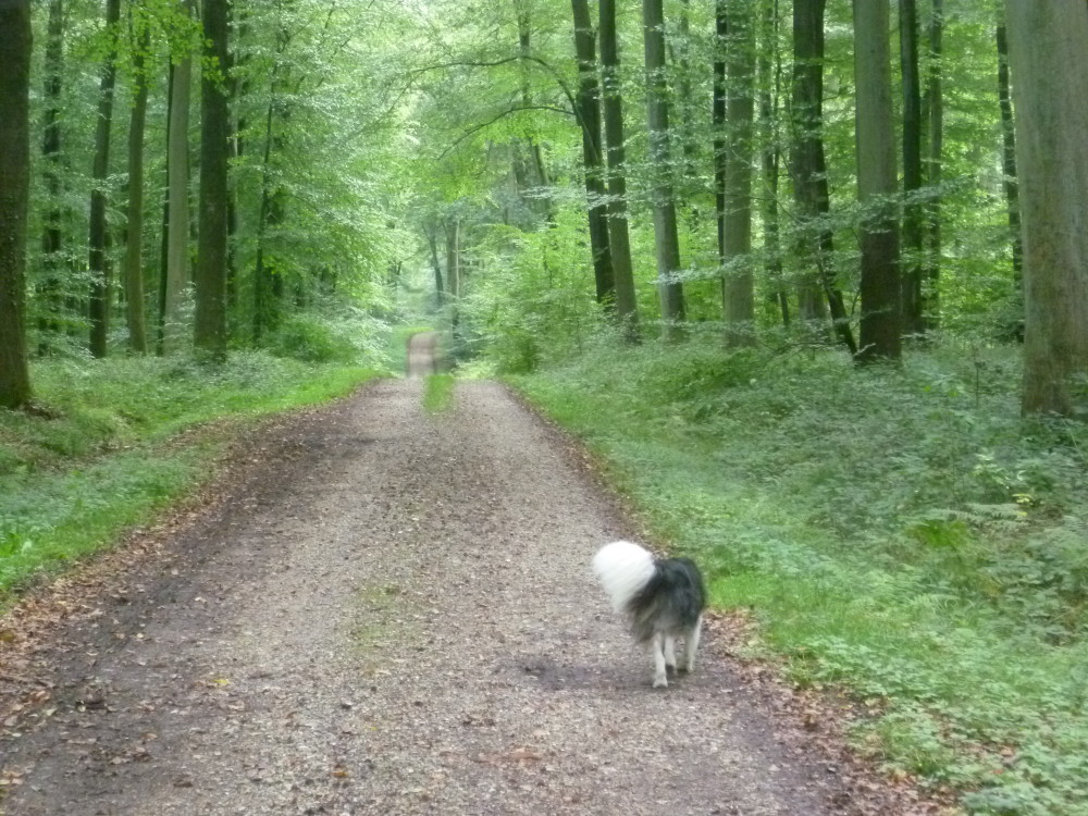 A28 exit 6 Forest dog walk near Foucarmont, France - Image 3