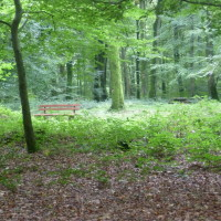 A28 exit 6 Forest dog walk near Foucarmont, France - Image 4
