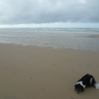 Opal coast dog-friendly beach, France - Image 3