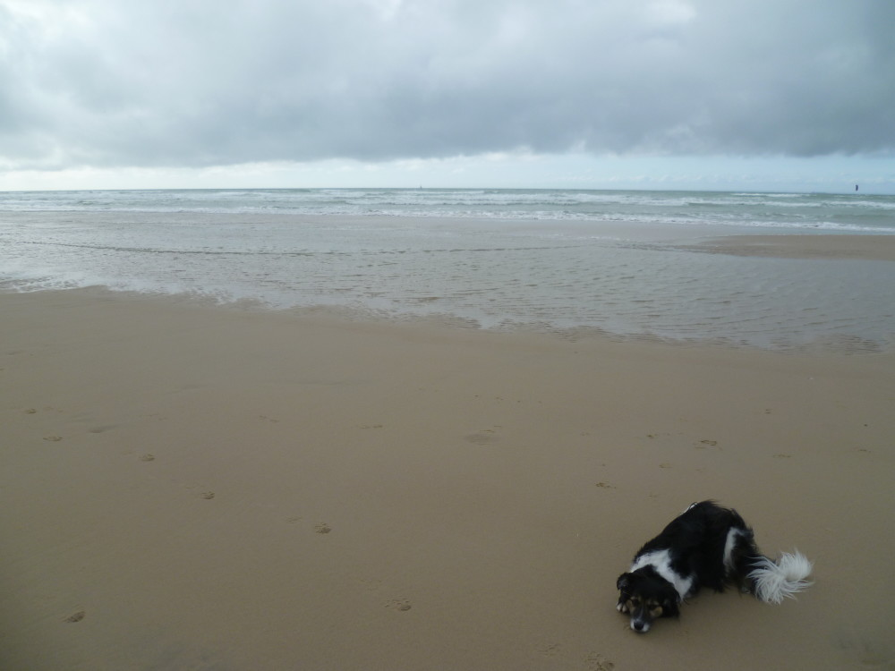 Opal coast dog-friendly beach, France - Image 3