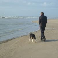 Berck dog-friendly beach, France - Image 1