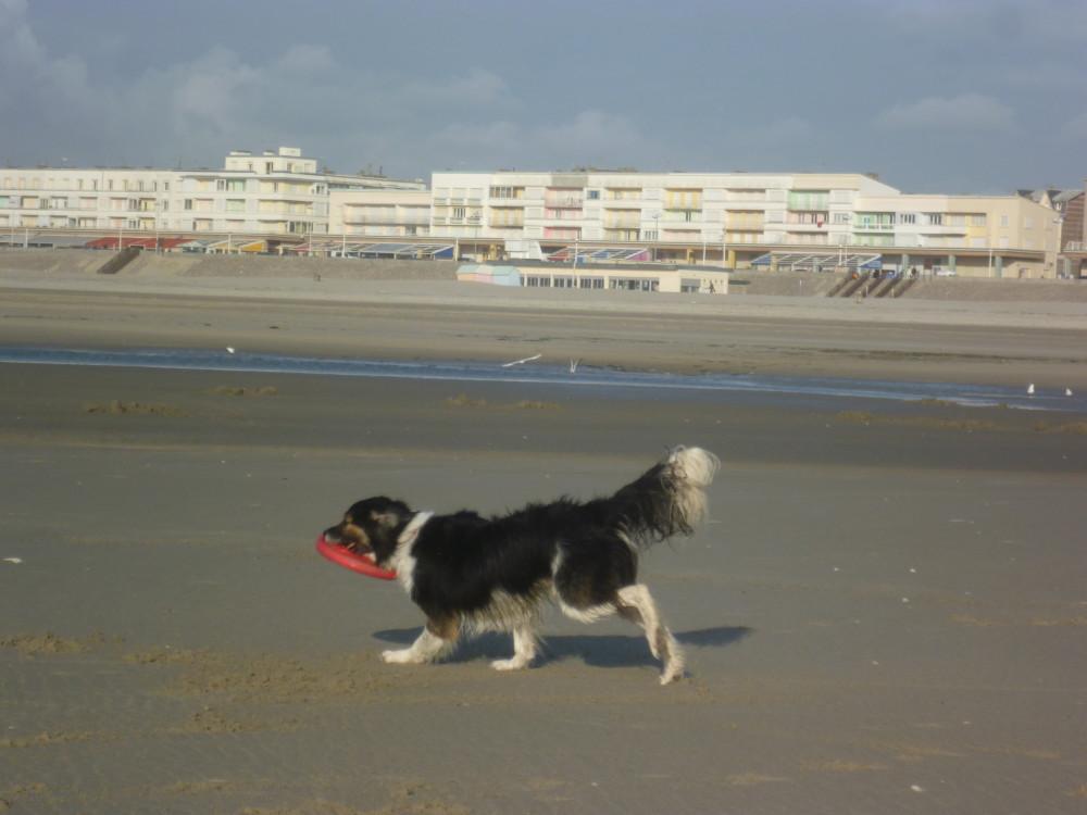 Berck dog-friendly beach, France - Image 2