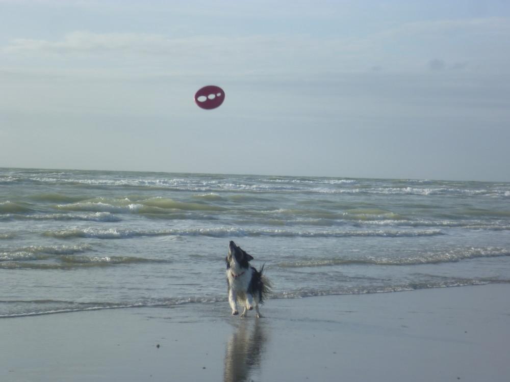 Berck dog-friendly beach, France - Image 3