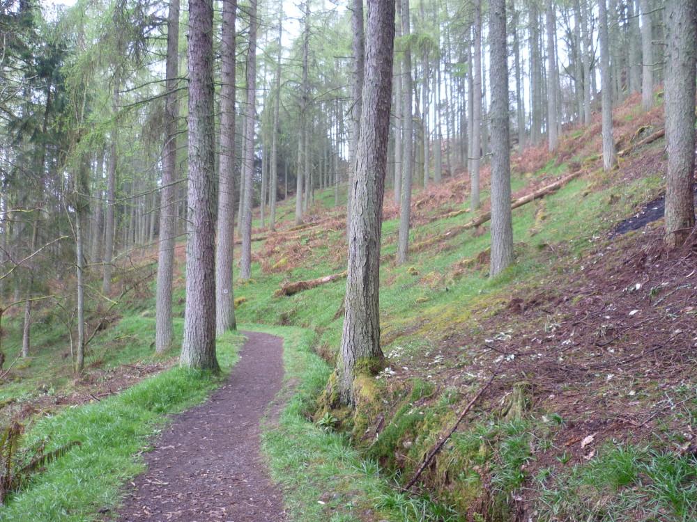 Kirkcudbright dog walk, Scotland - Dog walks in Scotland