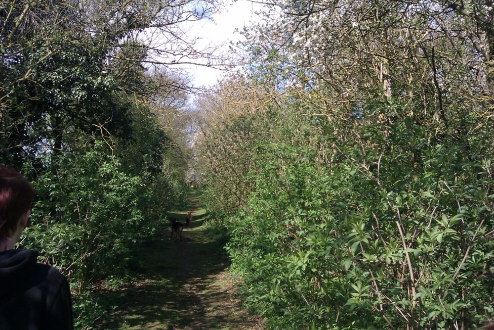 Sturdy's Castle dog walk, Oxfordshire - Dog walks in Oxfordshire