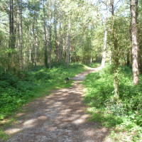 Brighton dog walk in a pine forest, France - Image 2