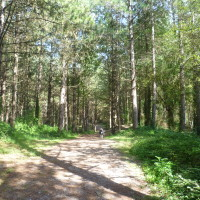 Brighton dog walk in a pine forest, France - Image 3