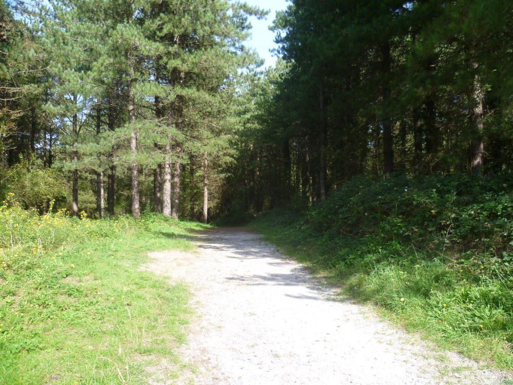 Brighton dog walk in a pine forest, France - Image 4