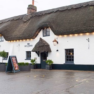 A31 dog-friendly pub and walk, Dorset - Driving with Dogs