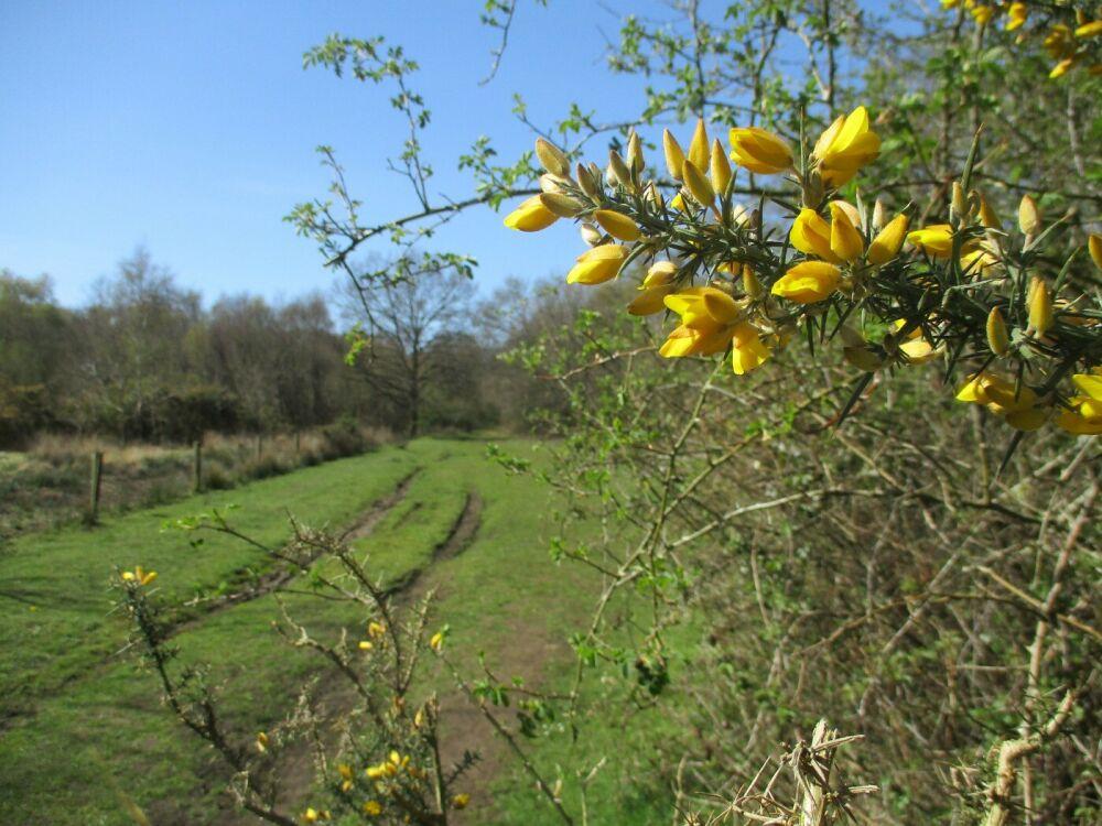 Marshy nature reserve dog walks, Norfolk - nature reserve dog walk.jpg