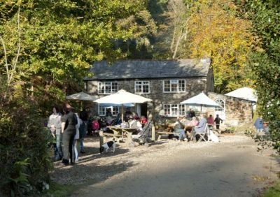 A30 Woodland dog walk and forest cafe near Bodmin, Cornwall - Driving with Dogs