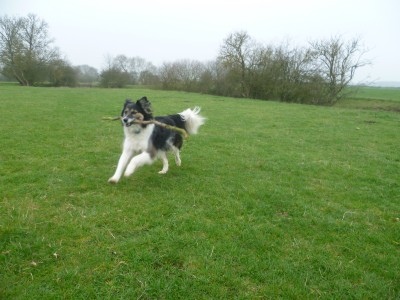 A423 near Leamington dog-friendly pub and dog walk, Warwickshire - Driving with Dogs