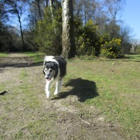 Dog walk on the Common near Haslemere, West Sussex - Sussex dog-friendly pub and dog walk.JPG