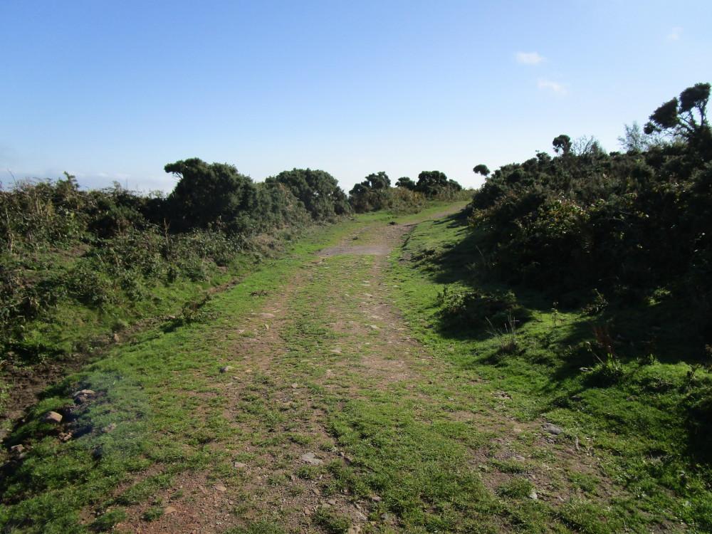 Selworthy Beacon dog walk, Somerset - Dog walks in Somerset