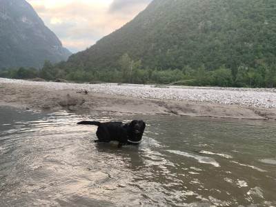 vet for dog pre UK return, France - Driving with Dogs