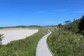 Forest dog walk and beach in Donegal, RoI - Ireland dog walking places.jpg