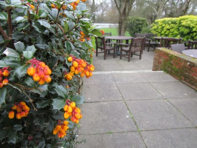 A273 dog-friendly pub near Burgess Hill, West Sussex - Driving with Dogs