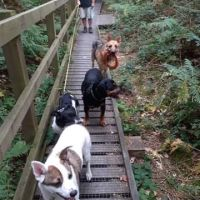 Beautiful hilly woods for a dog walk, Norfolk - 67EED7AC-D95D-443D-9860-308754187F7B.jpeg