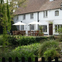 M3 Jct 5 dog-friendly refreshments and dog walk, Hampshire - Hampshire dog-friendly pub and dog walk