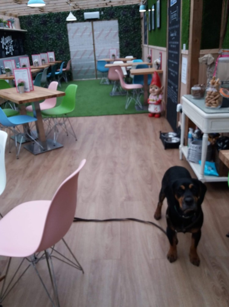 Excellent Dog friendly tearoom and field walks nearby, Leicestershire - 6FFE3799-725B-4D31-894C-51FA084AA6E4.jpeg