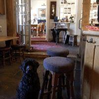 A381 dog-friendly pub and dog walk near Totnes, Devon - Dog-friendly B&B and pub.jpg