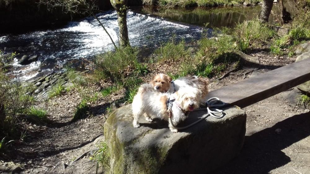 Hardcastle Crags dog walks, West Yorkshire - 20190411_131528.jpg