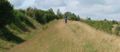 A350 dog walk through history, Dorset - Driving with Dogs