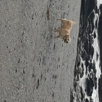 Portwrinkle Beach - dog-friendly, Cornwall - 20191015_110904.jpg