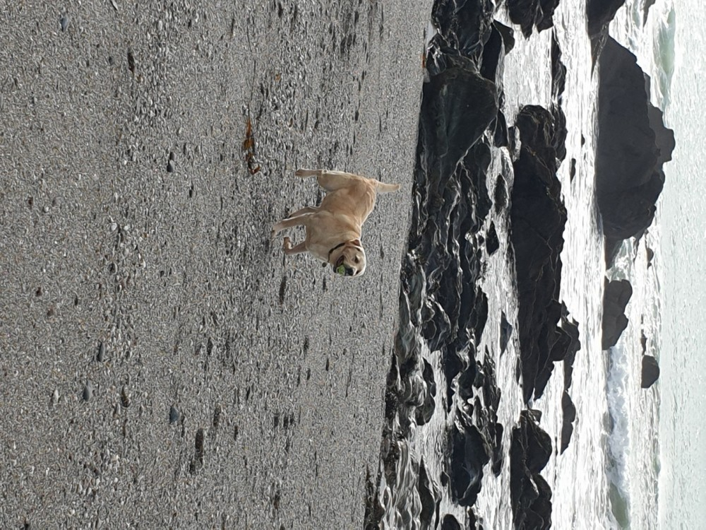 Portwrinkle Beach - dog-friendly, Cornwall - 20191015_110904.jpg