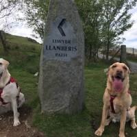 BigglesandZukie - Driving with Dogs